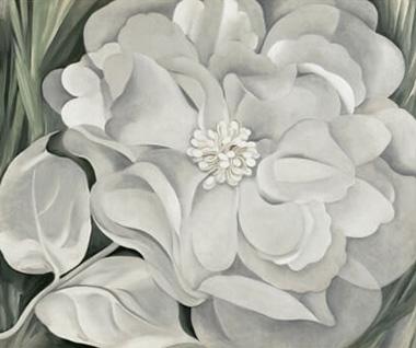 White Calico Flower Georgia O'Keeffe