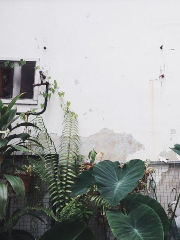 Seccculents